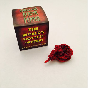 Dried Carolina Reaper Pepper